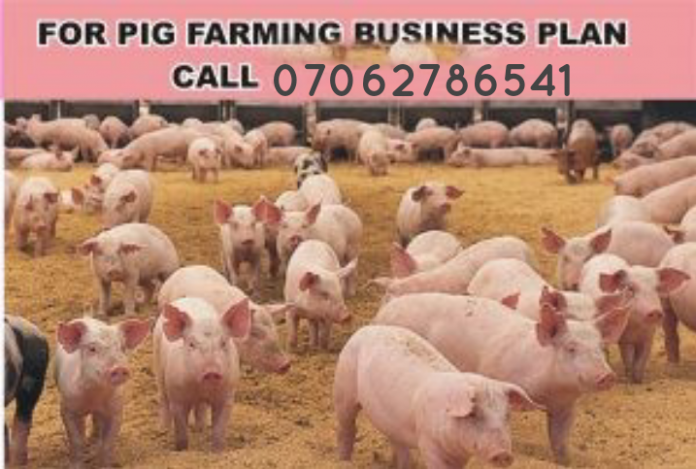 Pig Farming Business Plan In Nigeria