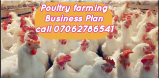 Poultry Farming Business Plan In Nigeria