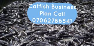 catfish business plan in nigeria