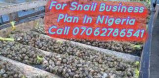 Snail Farming Business Plan In Nigeria PDF