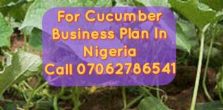 Cucumber Farming Business Plan In Nigeria