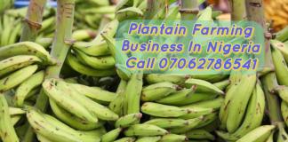 Plantain Farming Business Plan in Nigeria PDF