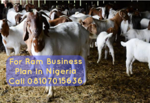 Ram business plan in Nigeria
